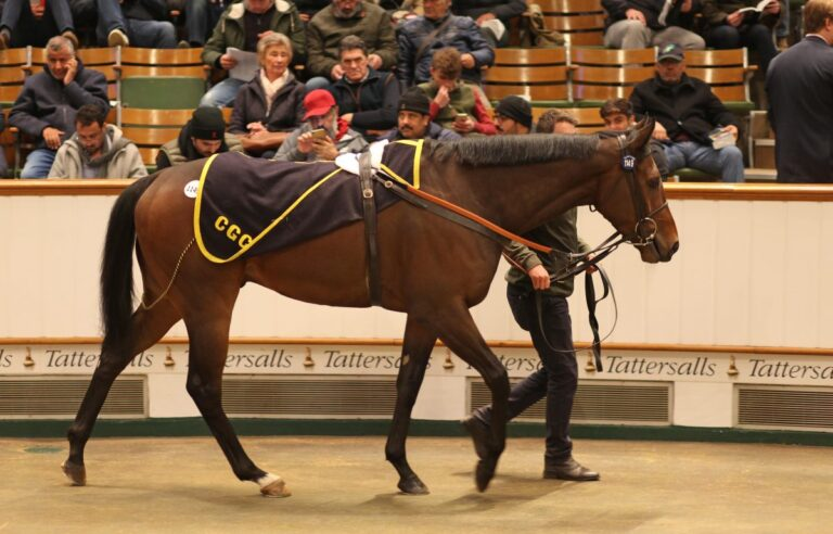 Salute The Soldier purchased from Tattersalls HIT Sale