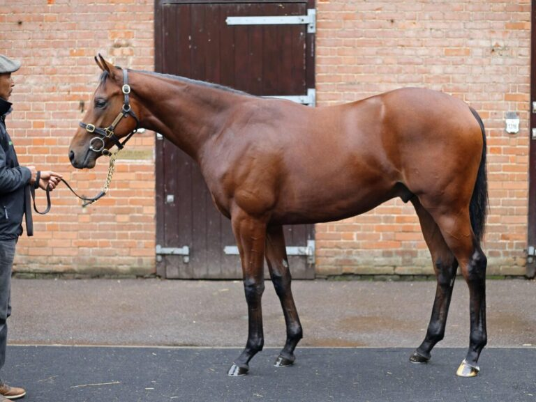 Kingman colt out of Galicuix purchased for 2.7 million guineas at Tattersalls Book 1 Yearling Sale