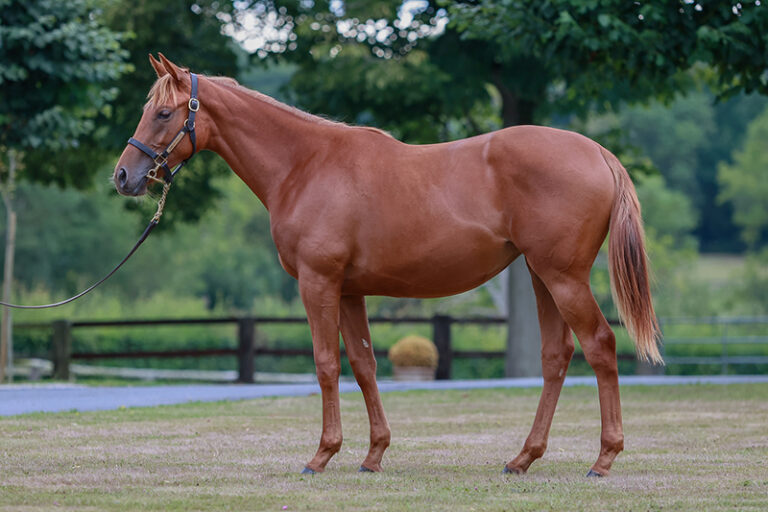 Dubawi yearling filly out of Starlet's Sister purchased for €2.5 million at the Arqana September Yearling Sale
